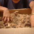 Ford desarrolla bioplastico basado en fibra de agave 1